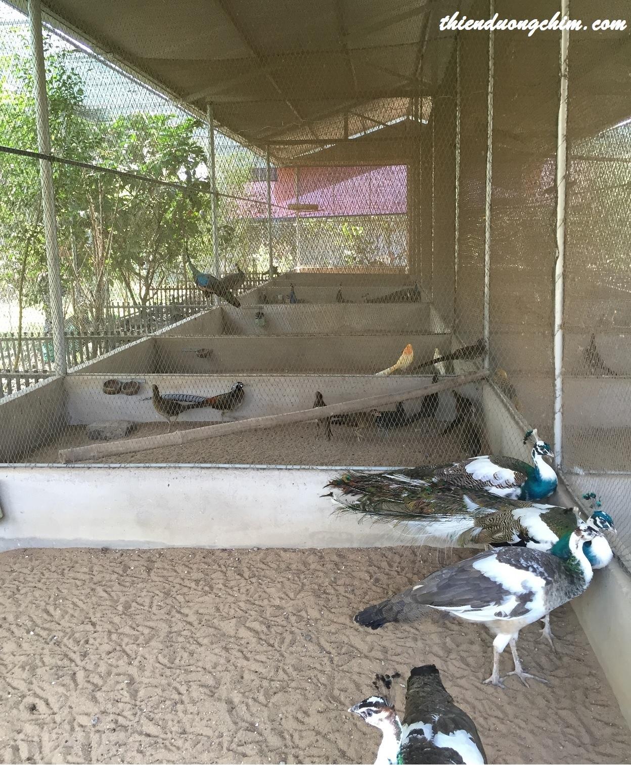 Kỹ thuật làm chuồng trại chim Công